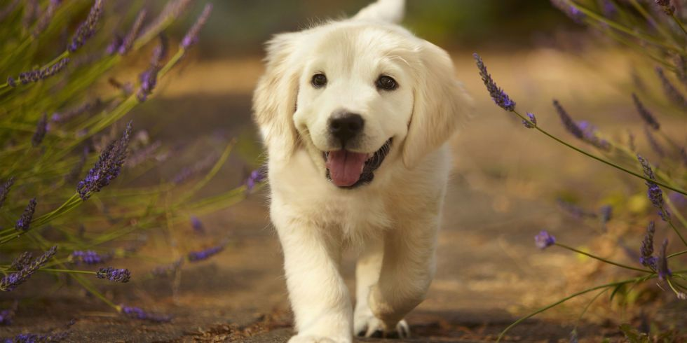 A Definitive Ranking Of The 25 Absolute Cutest Dog Breeds Puppies