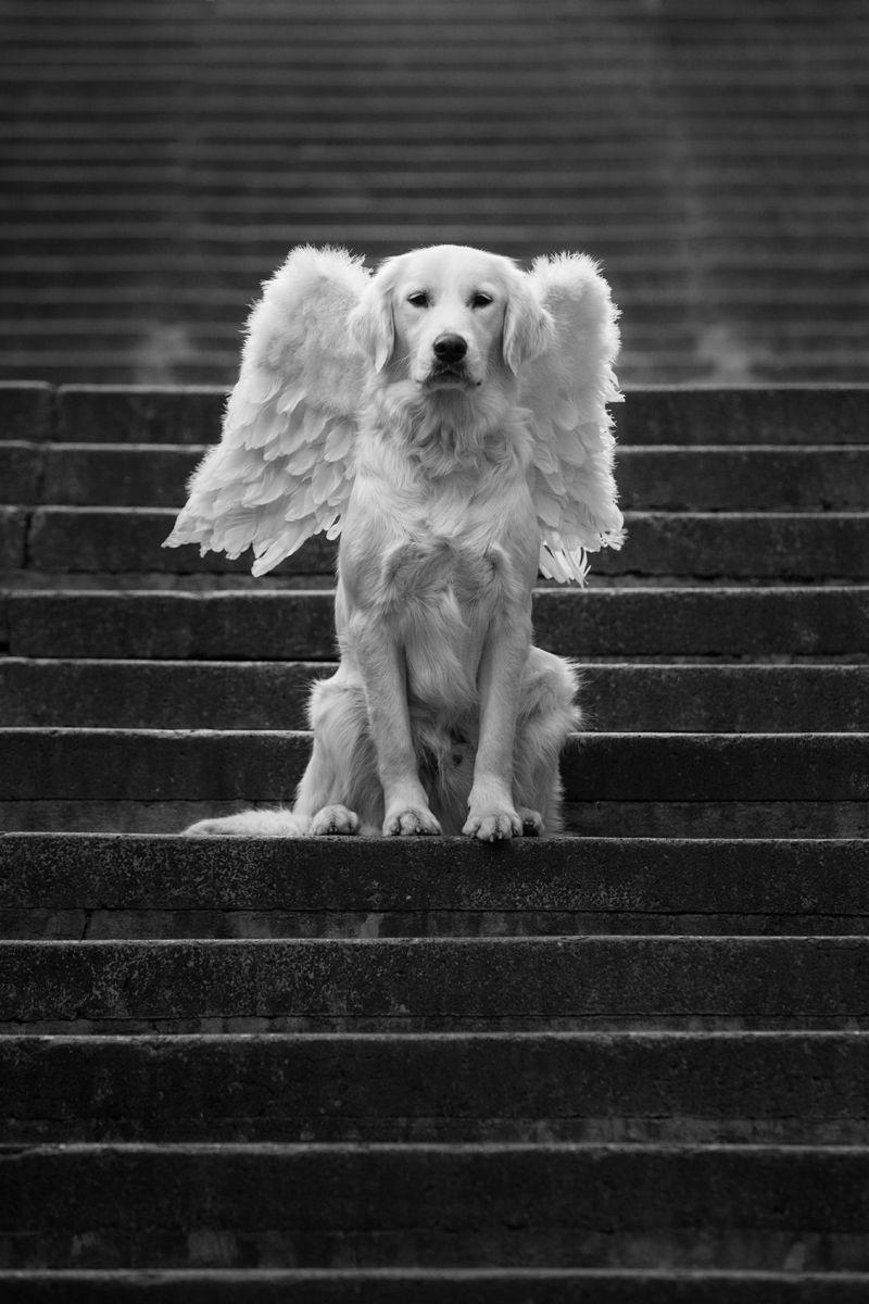 Typhlological Museum News Dog Angel Dog Life Dog Love