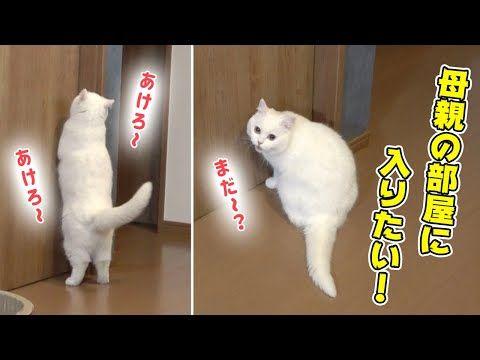 さん ポム 人気の猫YouTuberポムさんが可愛すぎる…!ポムさんのプロフィールをまとめました!