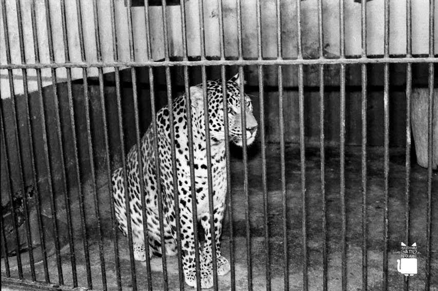 Zoo giardini pubblici porta Venezia Milano, Venezia e