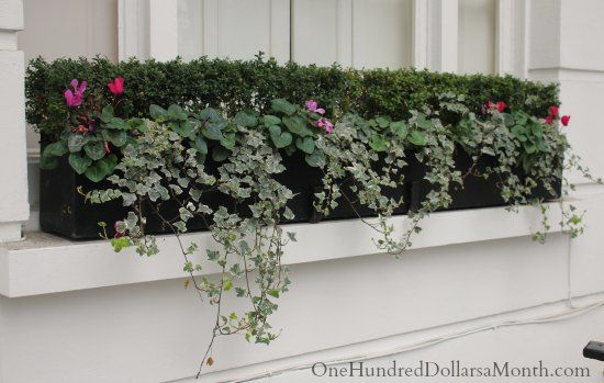 Window Box Ideas For Late Winter And Early Spring One Hundred Dollars A Month Window Box Spring Window Early Spring