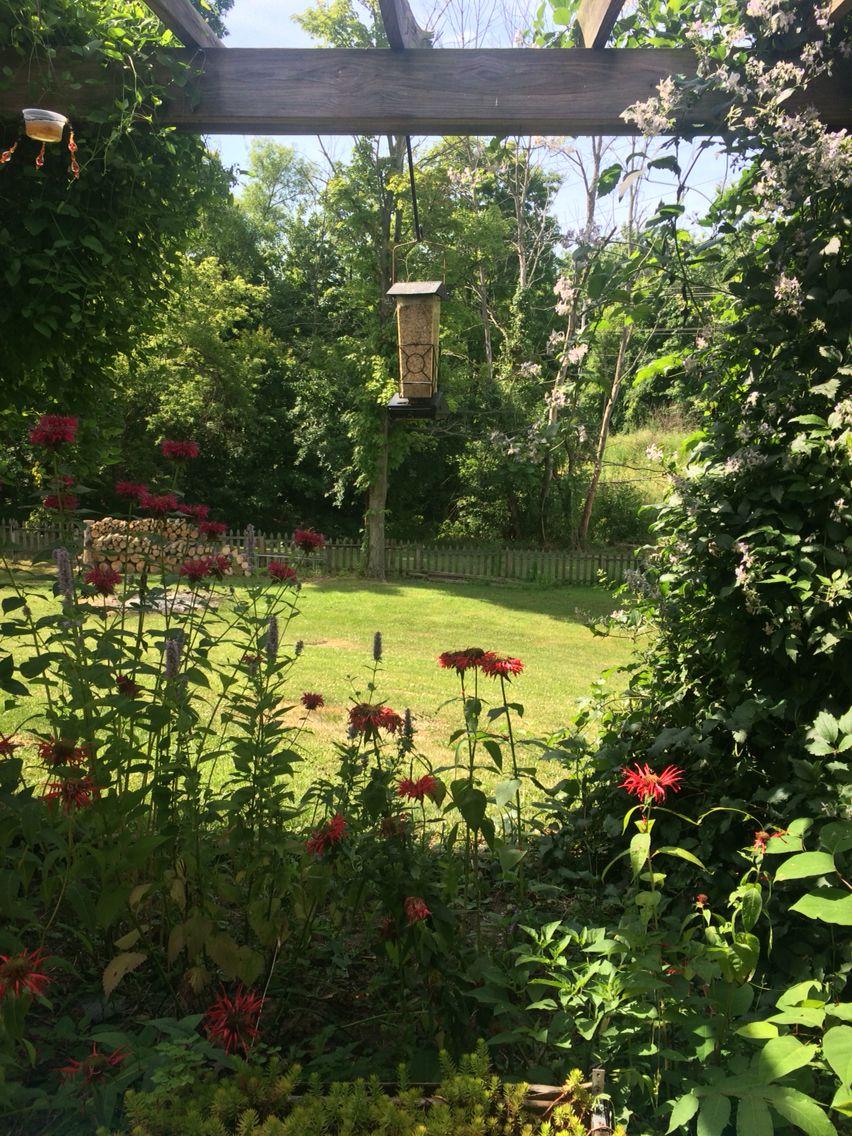 My Hummingbird Pergola-my happy place❤️
