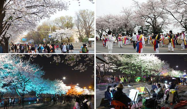 Yeouido Cherry Blossom Festival in Seoul, South Korea