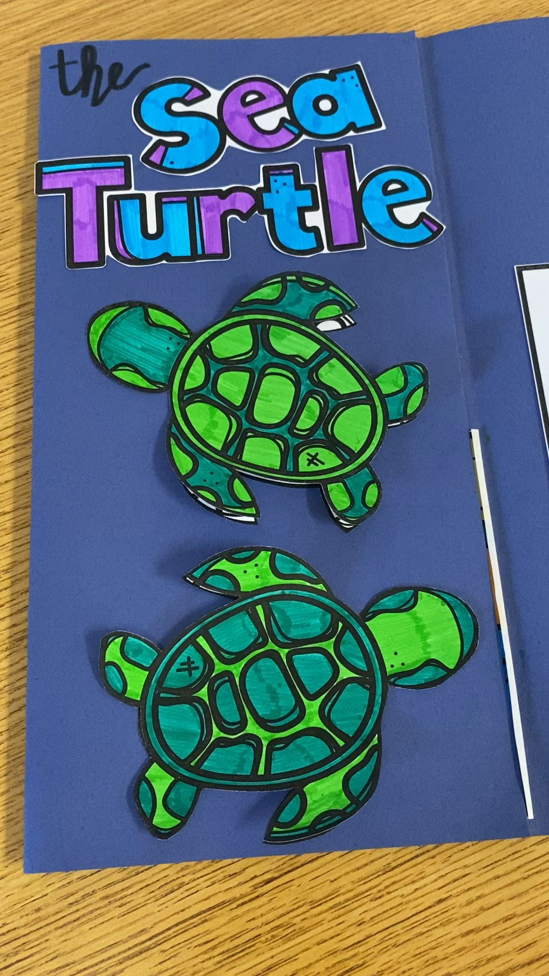 Life Cycle Of A Sea Turtle Lesson Plan Ideas