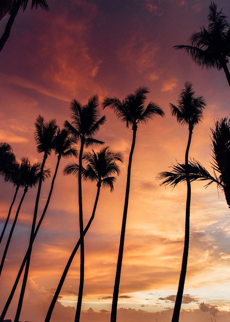 Palm Trees Against A Gorgeous Sunset Sky In Costa Rica Tree Silhouette