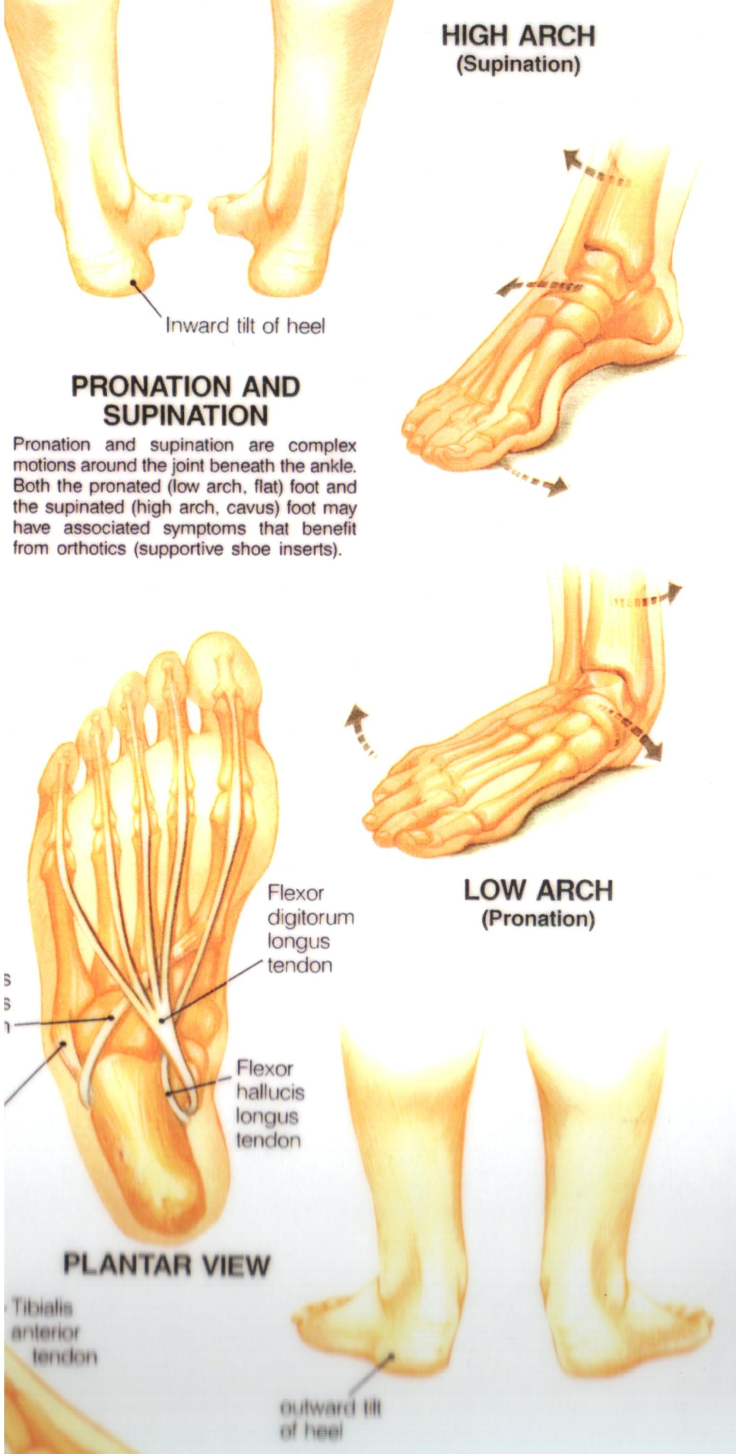 Pronation and Supination | Massage Therapy | Pinterest ...