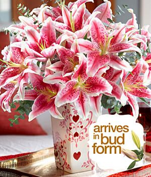 Stargazer Lilies I Love Lilies If Anyone Ever Ask Any Of You What They Should Get Me Tell Them Lilies Stargazer Lily Lily Flower Love Lily