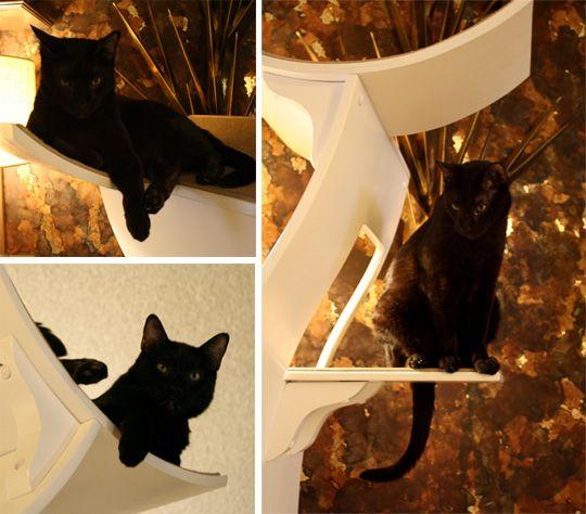 Little Lotus Cat Tree From The Refined Feline Little Lotus Cat Tree Cat Design