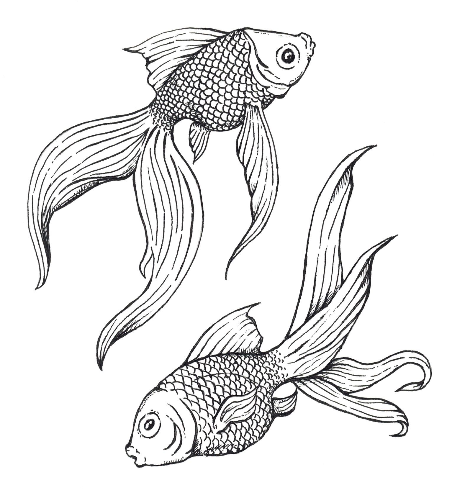 Gold Fish - Pen & Ink by Wendell Cisco II | Artwork by Wendell W ...