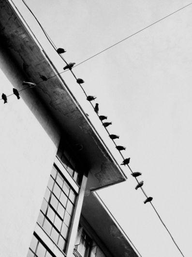 Birds on a wire. Designspiration — hellopanos blog