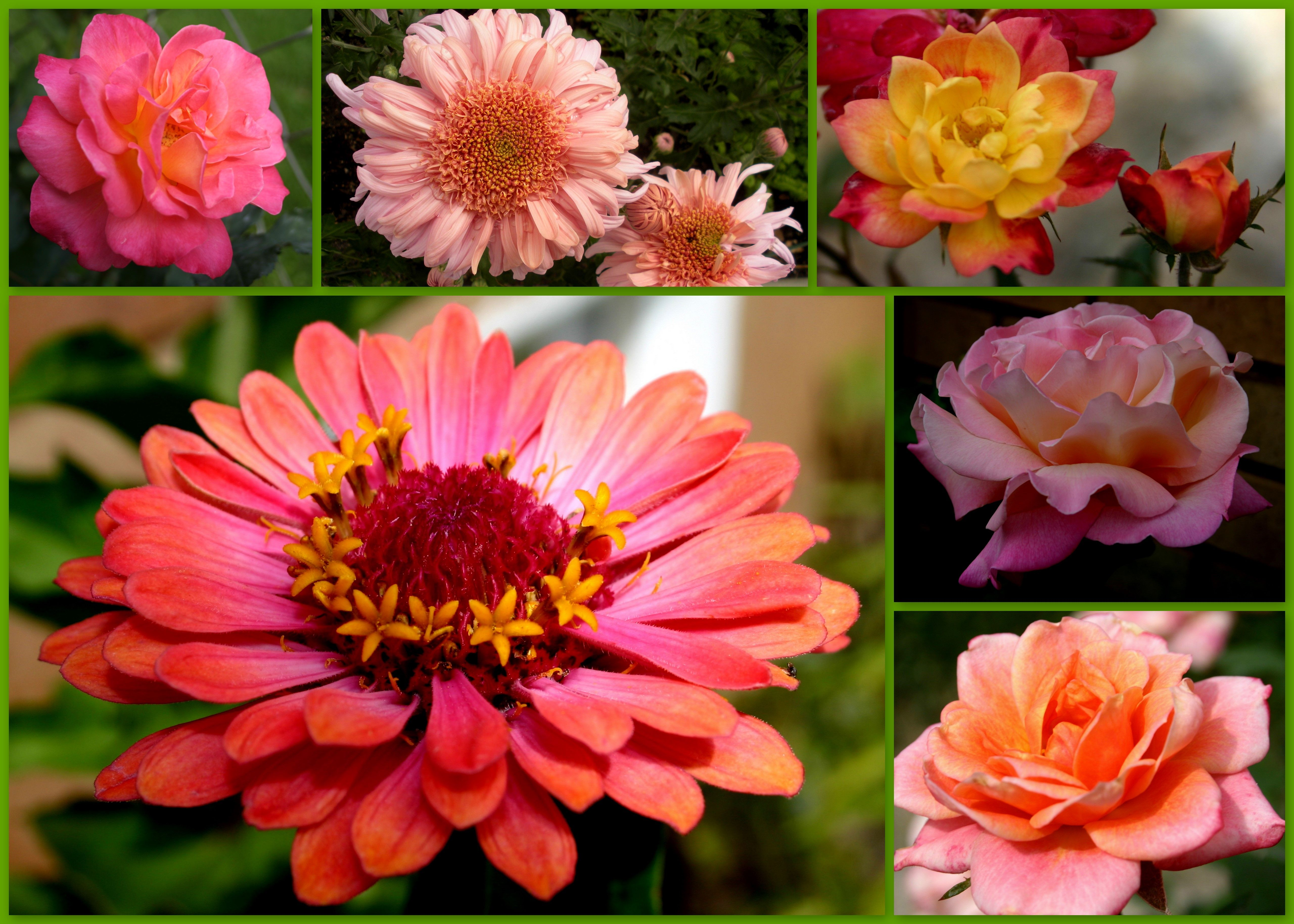 Lovely fall blooms from the garden