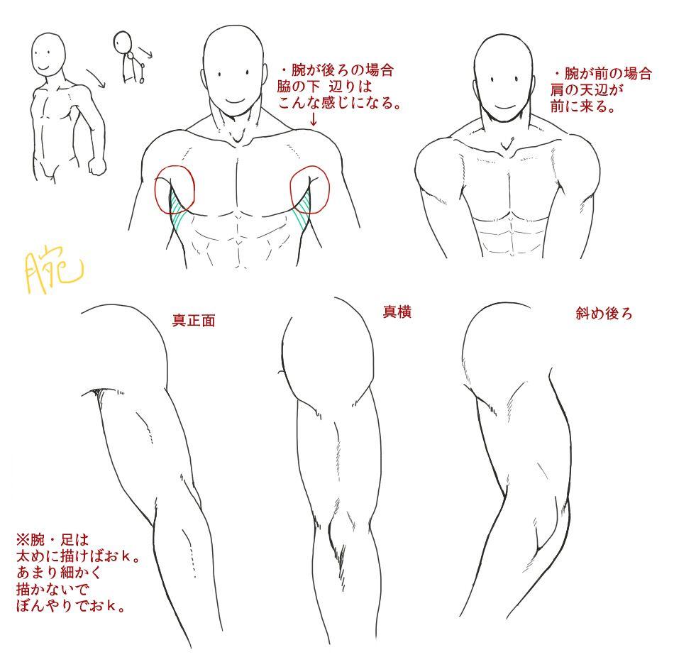 Male anatomy   Art Tips   Pinterest   Anatomy, Anatomy tutorial and Draw