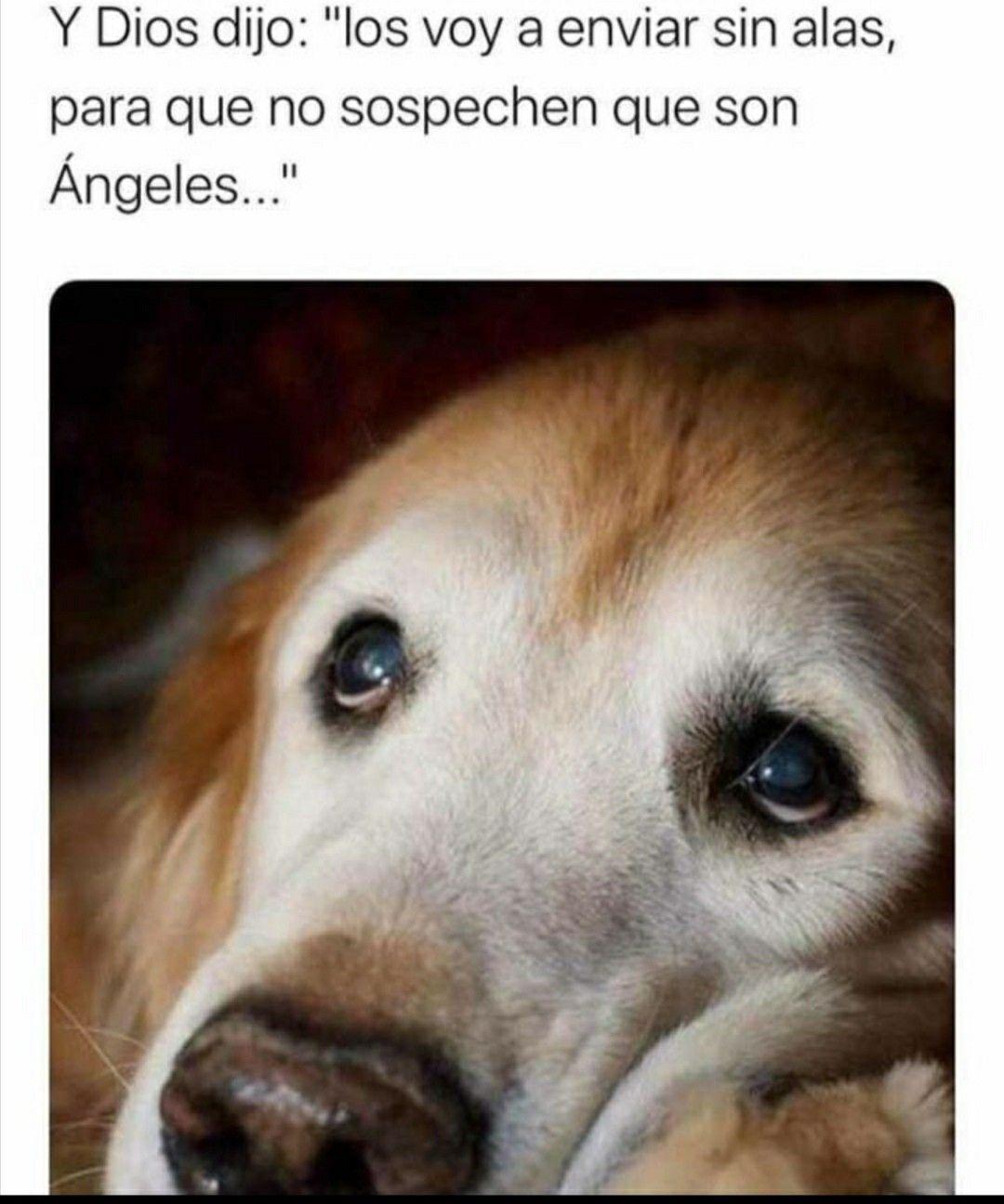 Pin De Celeste De Leon En Dog En 2020 Perros Frases Animales Frases Memes De Perros Chistosos