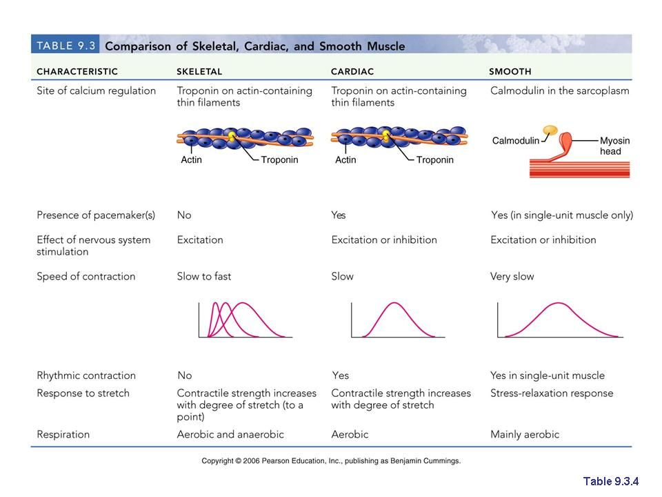 compare and contrast cardiac and skeletal muscle If you are keen to know about the features which make a cardiac muscle different  from a skeletal muscle, here is an article giving you a.