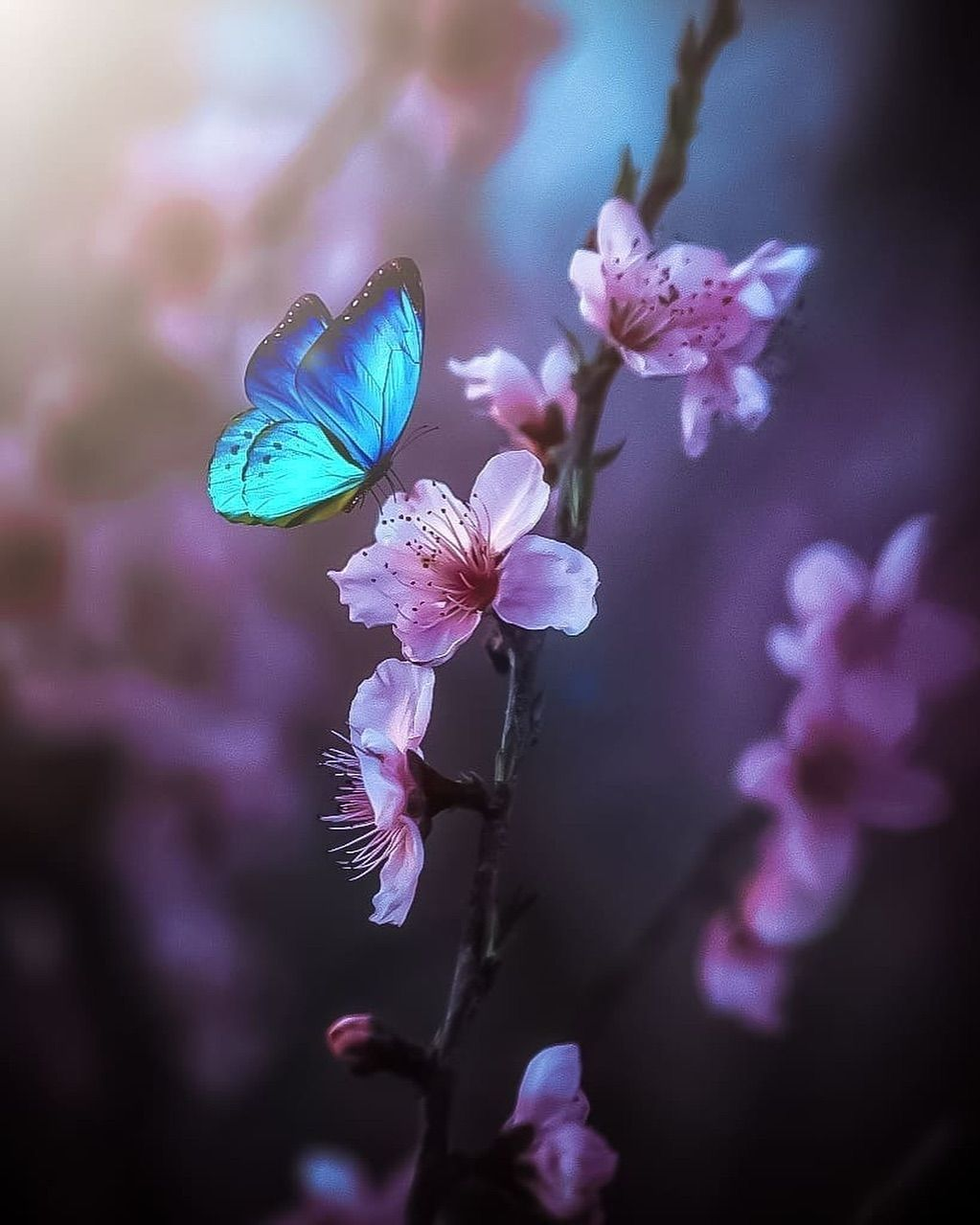 Nature On Instagram The Simplicity Beauty Of Nature Izmir Province Turkey Photo By Orhano Beautiful Butterflies Butterfly Wallpaper Flower Wallpaper