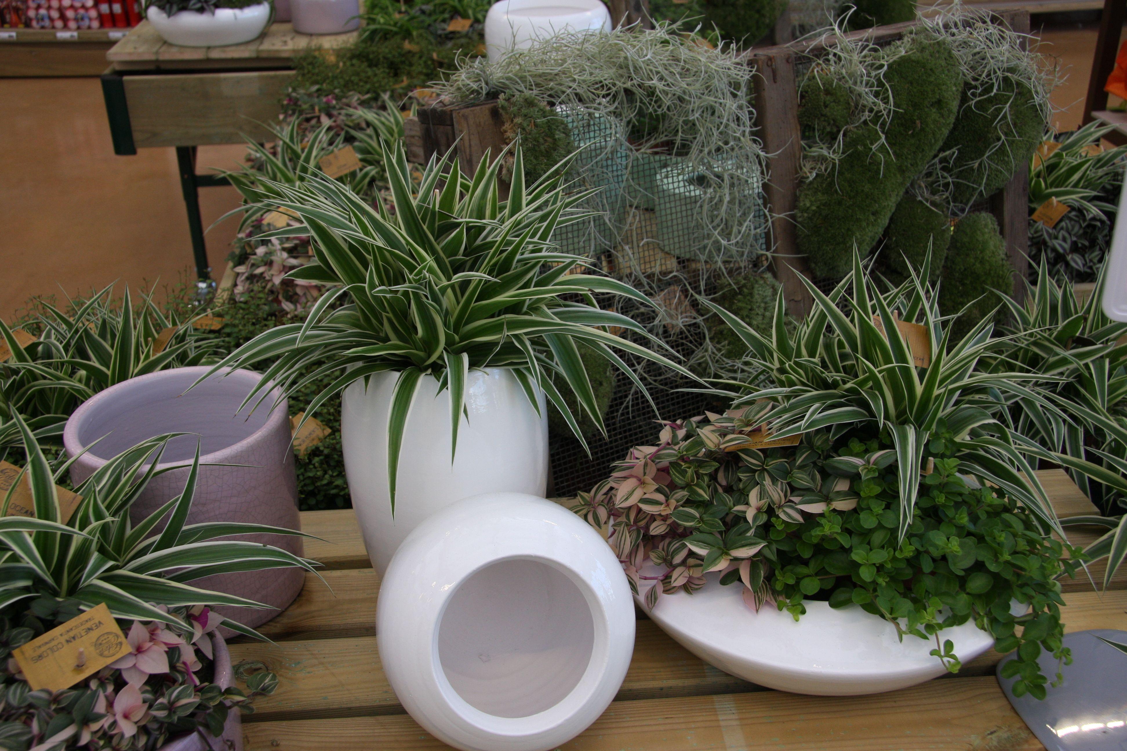 Le piante da interno hanno esigenze diverse per quanto riguarda
