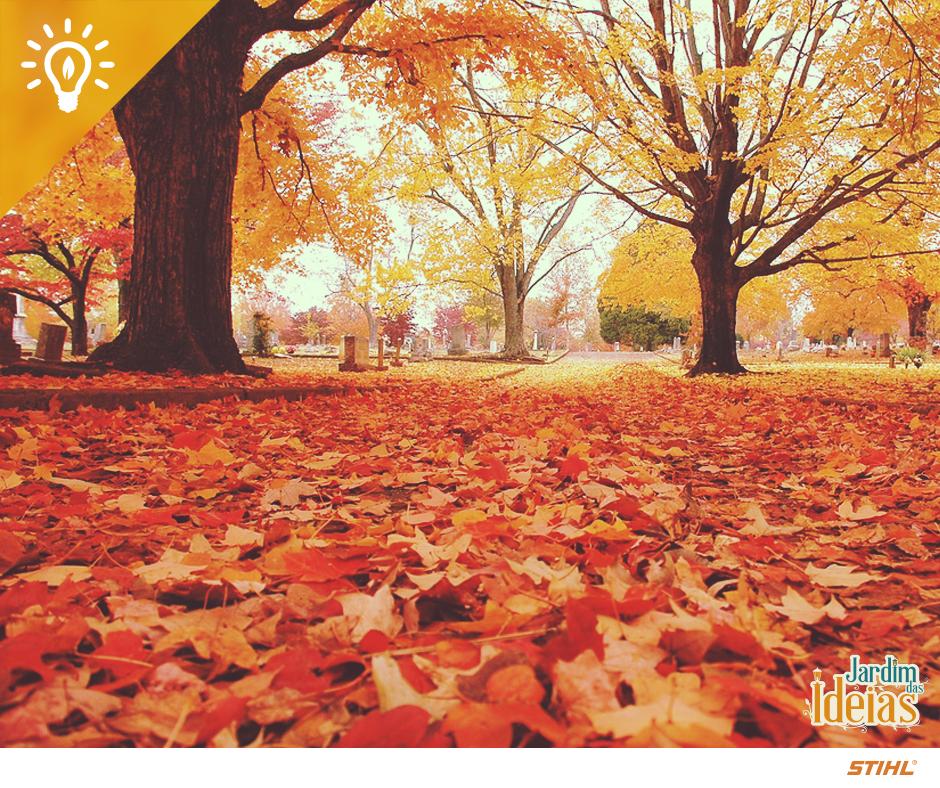 """Uma curiosidade sobre o outono: as folhas caem como parte de uma """"estratégia"""" das árvores para se proteger do frio e reduzir o gasto com energia. Como os dias são mais curtos e a incidência de luz solar é menor, as árvores mudam seus aspectos para se manterem vivas e saudáveis."""