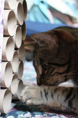 cat toy dyi made of toilet paper rolls put into a tissue. Black Bedroom Furniture Sets. Home Design Ideas