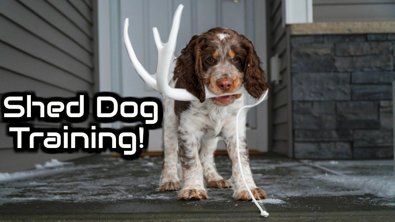 Dog Toys Aesthetic Saleprice 20 Dog Training Best Dog Toys