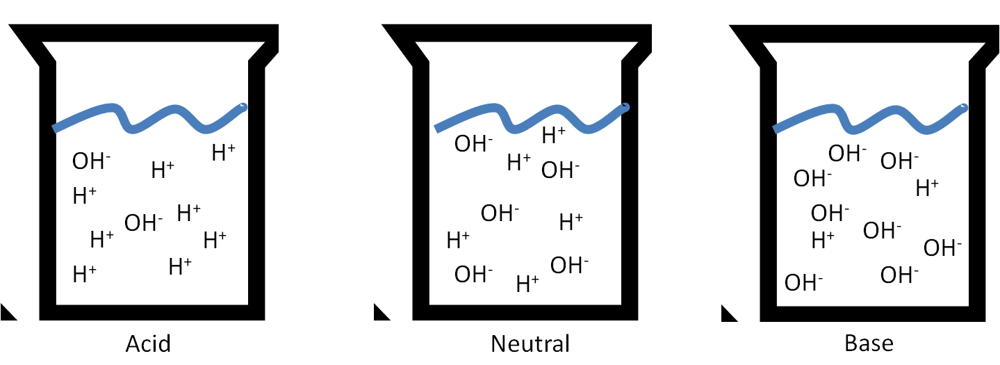 This figure shows what acids and bases look like in