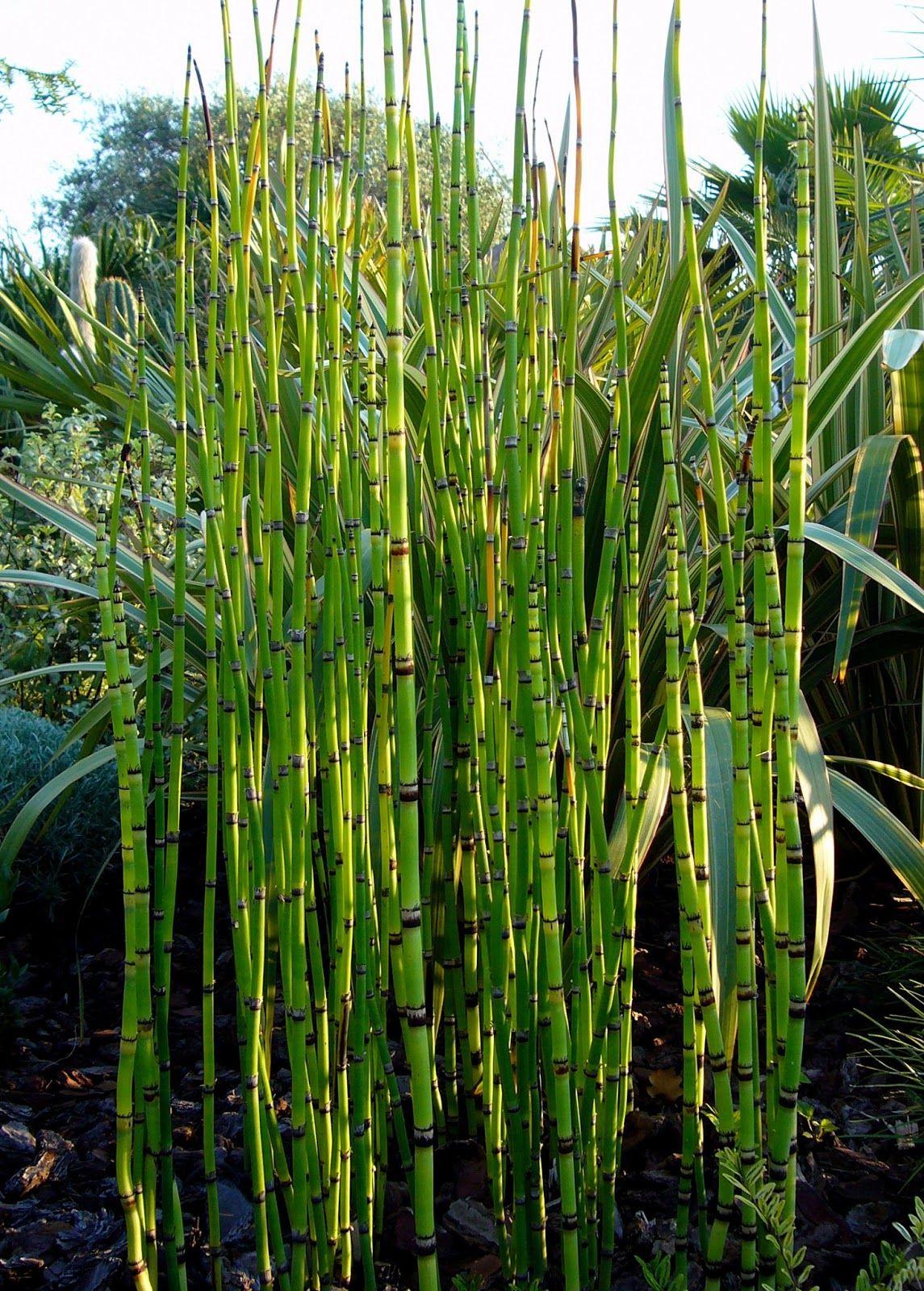 Arte y jardiner a dise o de jardines plantas de estanques for Plantas de estanque