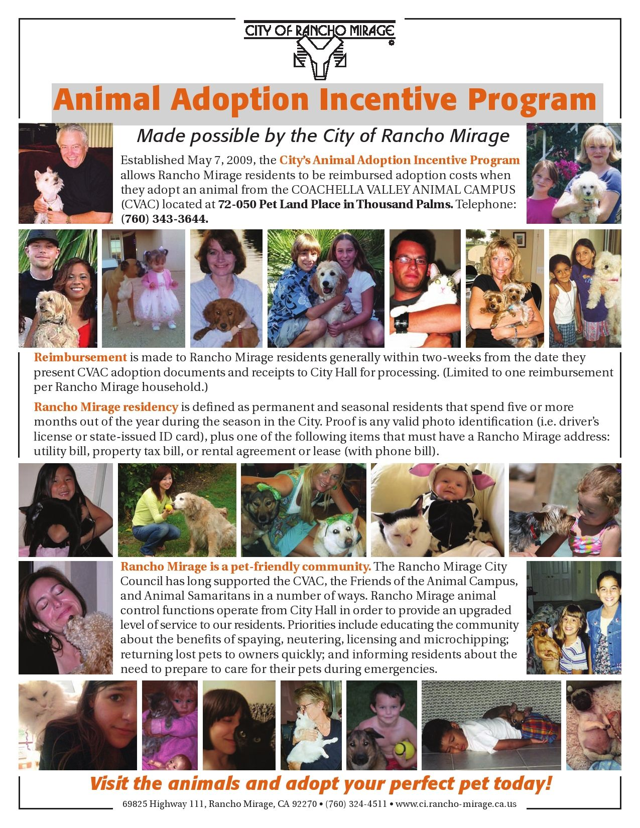Puppies for adoption in palm springs