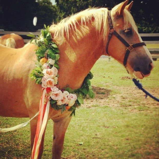 gorgeous horses at Kirsten Blower's wedding wearing flowers by Pigmint!