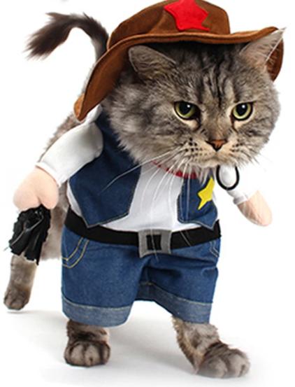 #bestmeow #thedailykitten #petstagram #pets #neko #meow #lovekittens #lovecats #kittycat #kitty #kittensofinstagram #kittens #kitten #katze #instagramcats #instacats #instacat #ilovemycat #gato #cutecat #catstagram #catsofinstagram #catsofig #catsagram #cats_of_instagram #cats #catoftheday #catlovers #catlover #catlife #cat_features