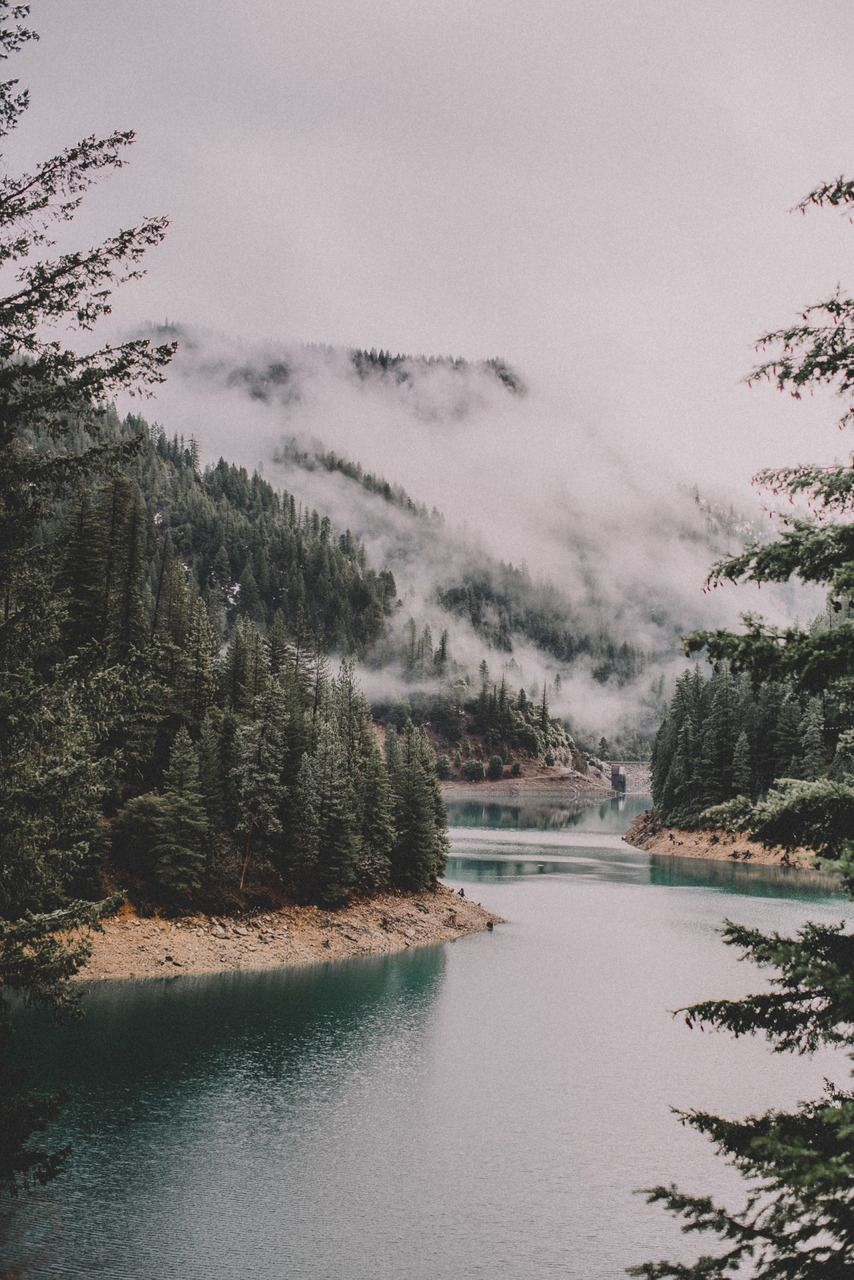 beauty, forest, lake, nature, woods