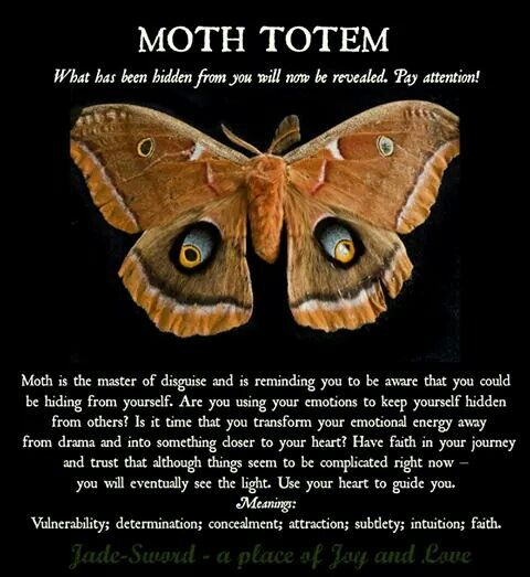 Moth Totem Mystical Magical Insects Pinterest Totems Moth