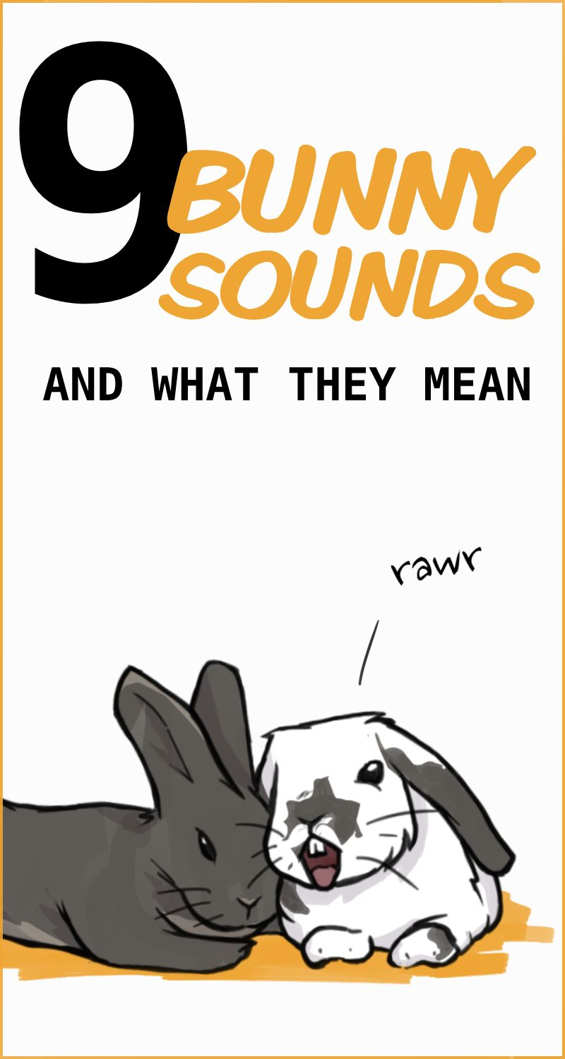 Rabbit Sounds What Are They Trying To Tell You In 2020 Pet Bunny Rabbits Rabbit Sounds Pet Rabbit Care