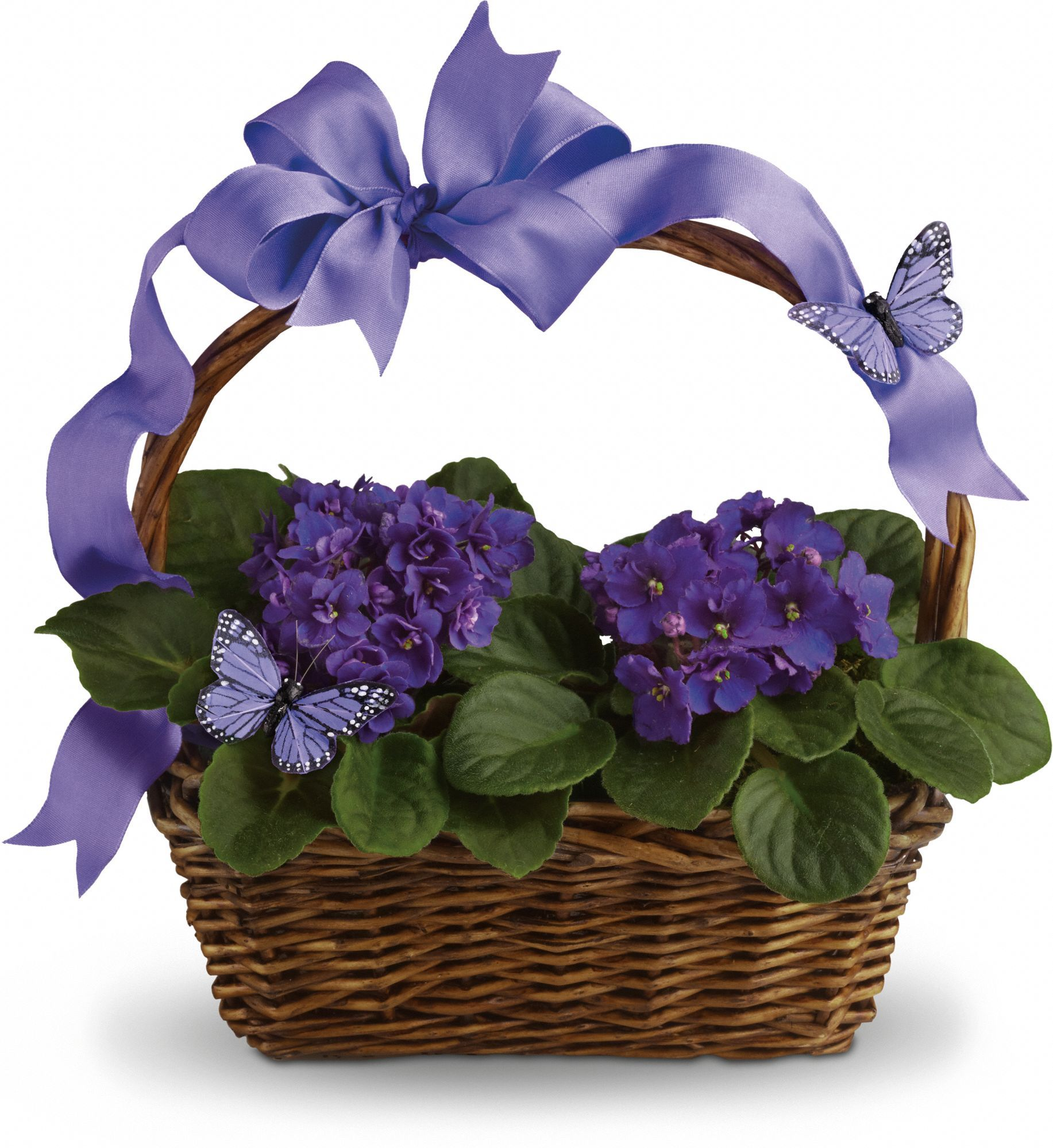 Giving plants this time of year simple easter basket with african giving plants this time of year simple easter basket with african violets add ribbon and negle Choice Image