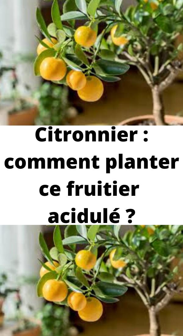 Citronnier : comment planter ce fruitier acidulé ? en 2020 | Cultiver des arbres fruitiers ...