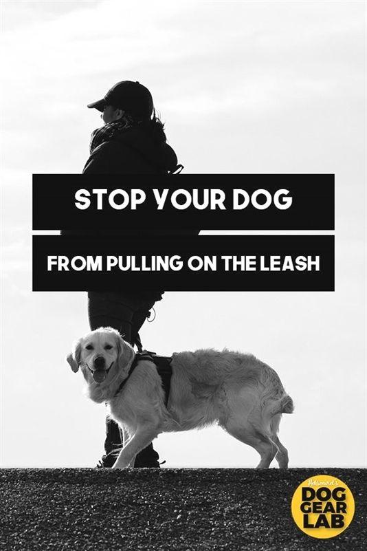 Dog Training Help Jump Start Dog Training Yorba Linda Dog