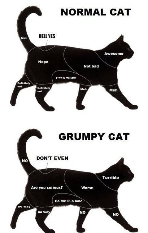 CAT MAP, this for all of you cat people must read its cute ... Cat Map on