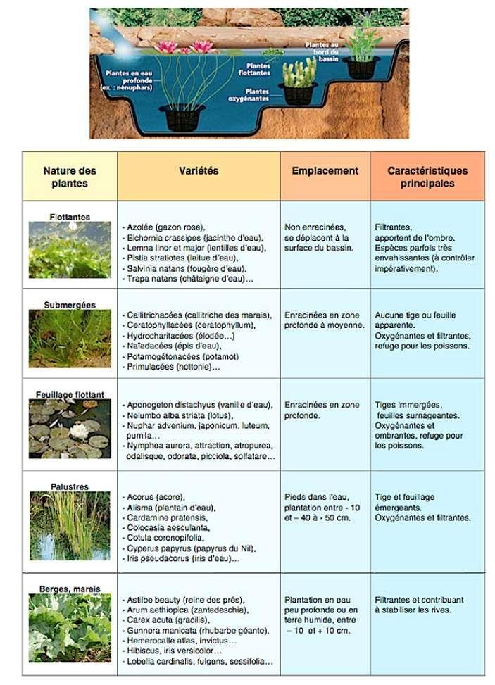 Maintenir une eau de bassin limpide et pure bassin de - Plantes aquatiques pour bassin de jardin ...