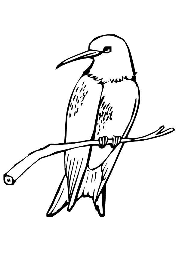 print coloring image | Cartoon Animals | Pinterest | Colibri dibujo ...
