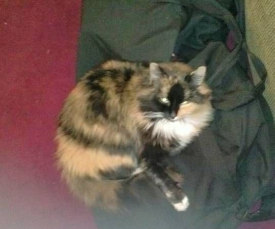 Lost Cats Manchester Ct Hide This Posting Image 1 Of 2