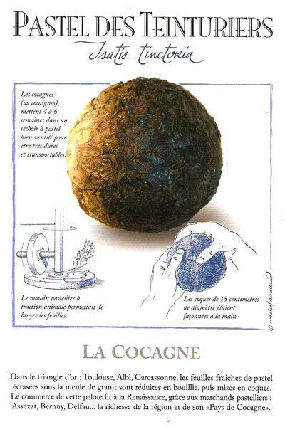 Pays De Cocagne Mots Fléchés : cocagne, fléchés, Histoire, Teinture, Naturelle,, Végétale,, Textile