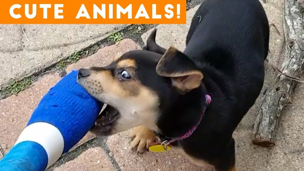Cutest Pets Of The Week Compilation February 2018 Funny Pet