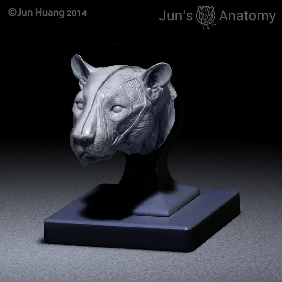 Leopard Anatomy model 1/6th scale - flesh & superficial muscle ...
