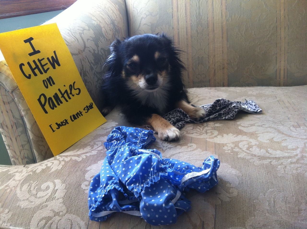 i chew on moms panties & anything else i can pull out of the laundry