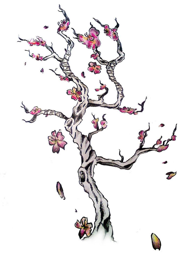 Watercolor Cherry Blossom Tattoos  Engine Tags How To Draw A Cherry  Blossom