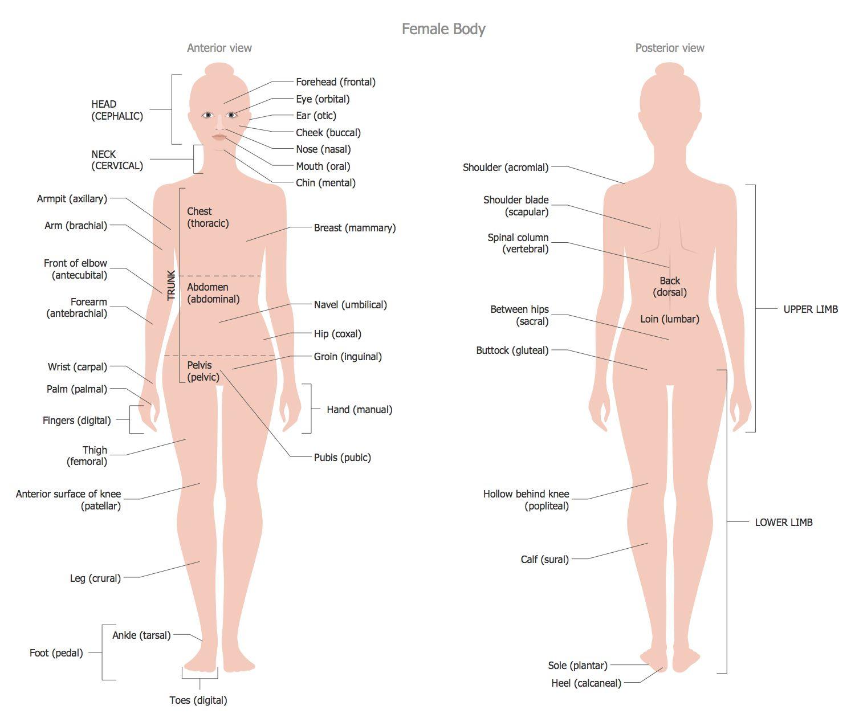Female Body Anatomy Organs Human Anatomy Study Pinterest Human