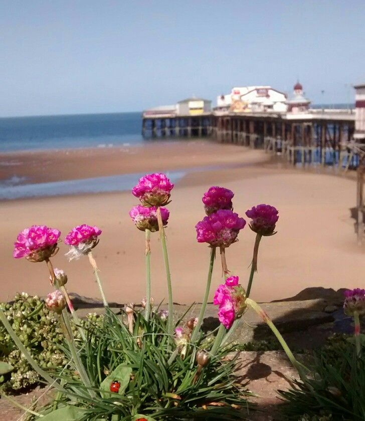 Blackpool north pier with sea pinks flowers blackpool blackpool north pier with sea pinks mightylinksfo
