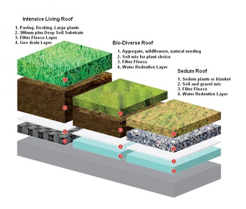 Merveilleux Living Roof Construction | Is A Sedum Roof Covering Best For A DIY Green  Roof?