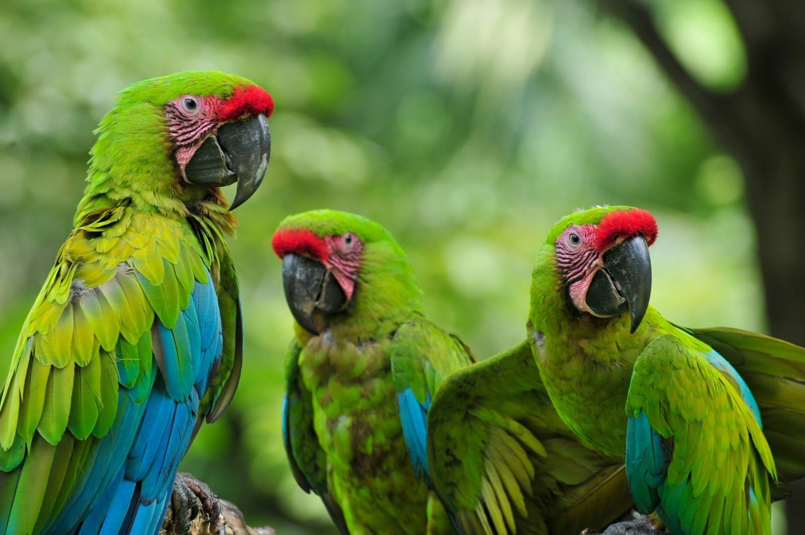 Google Rainforest Animals
