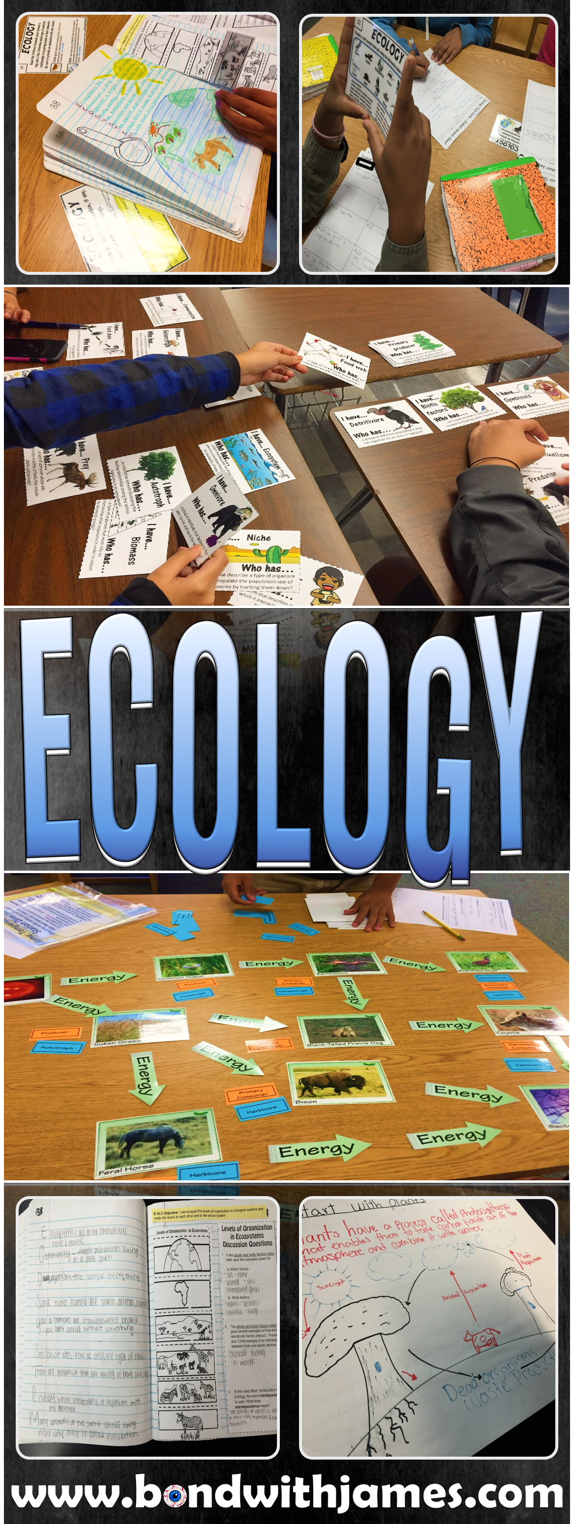 7 Ideas And Activities That I Used During My Ecology Unit