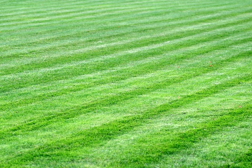 How Harmful Artificial Turf Is To The Environment With Images