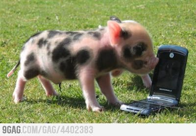 Hello Yes, this is pig..